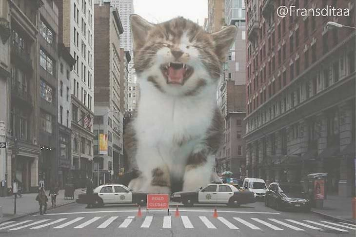 Artist Inserts Giant Cats in Images city street