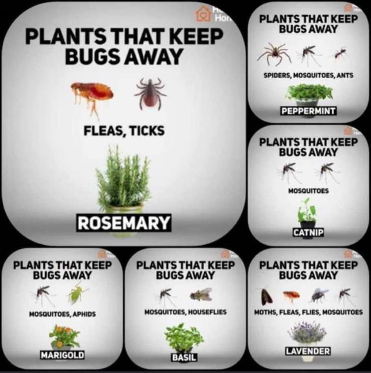 charts plants as bug repellants
