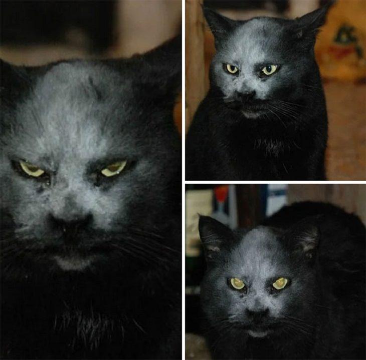 scary pets, devil