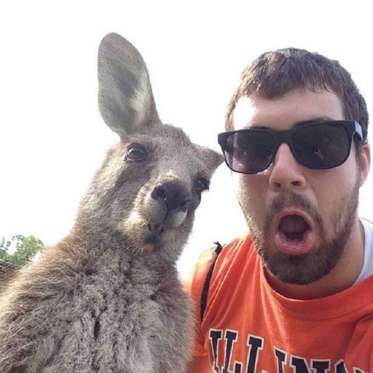 Funny Animals Pics,Selfie buddies!