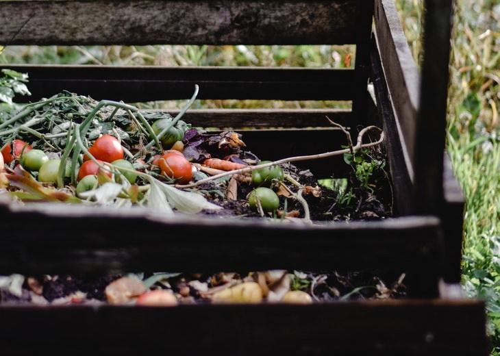 Black Fungus Covid-19  compost pile
