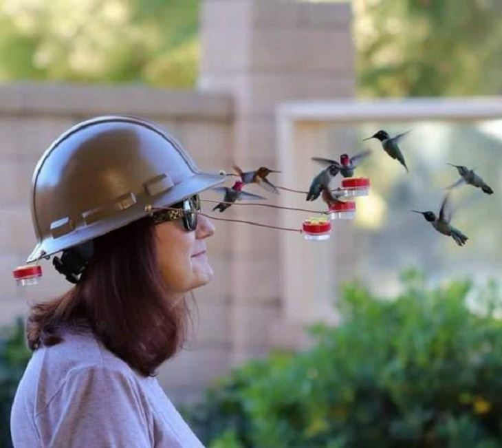 Animals and Humans, hummingbird helmet