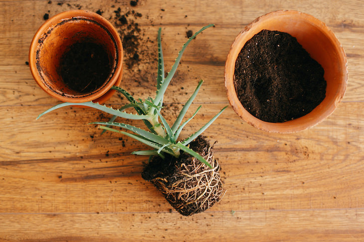 Tips to Revive a Dying Plant roots
