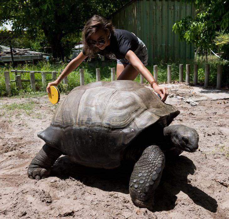 16 Photos Celebrating the Immense Power of Nature tortoise