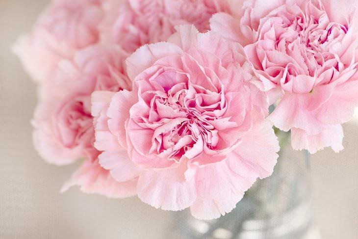 Origins of Flower Names carnation