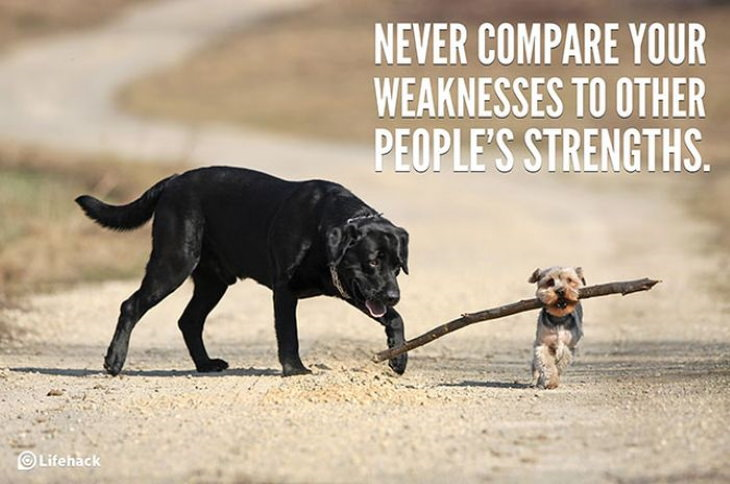 Quotes dogs