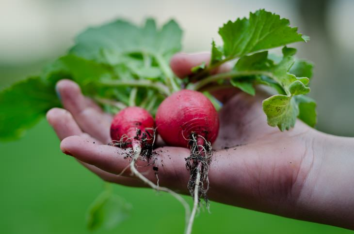 Easy Plants to Grow in Containers radishes