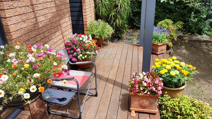 Easy Plants to Grow in Containers pretty container garden