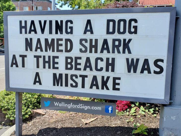 Wallingford Signs dog shark