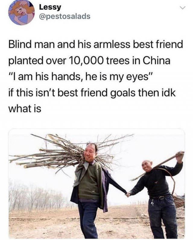 Wholesome Stories Chinese men plant 10,000 trees