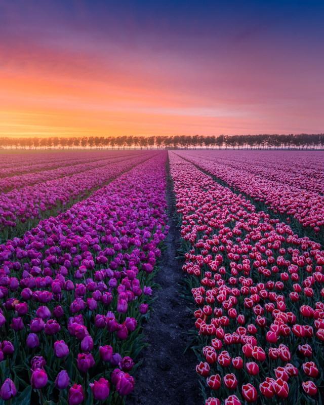 Netherlands In Spring Albert Dros Split