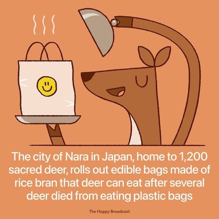 Happy and Positive News Stories From 2021 edible bags