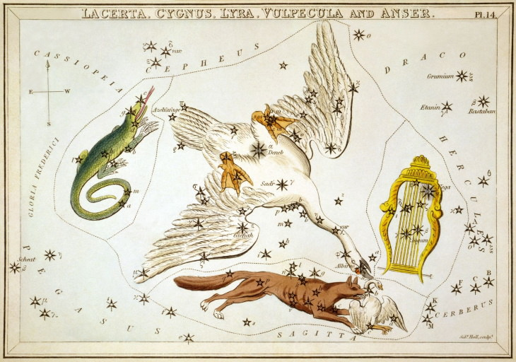 Constellation Myths Cygnus