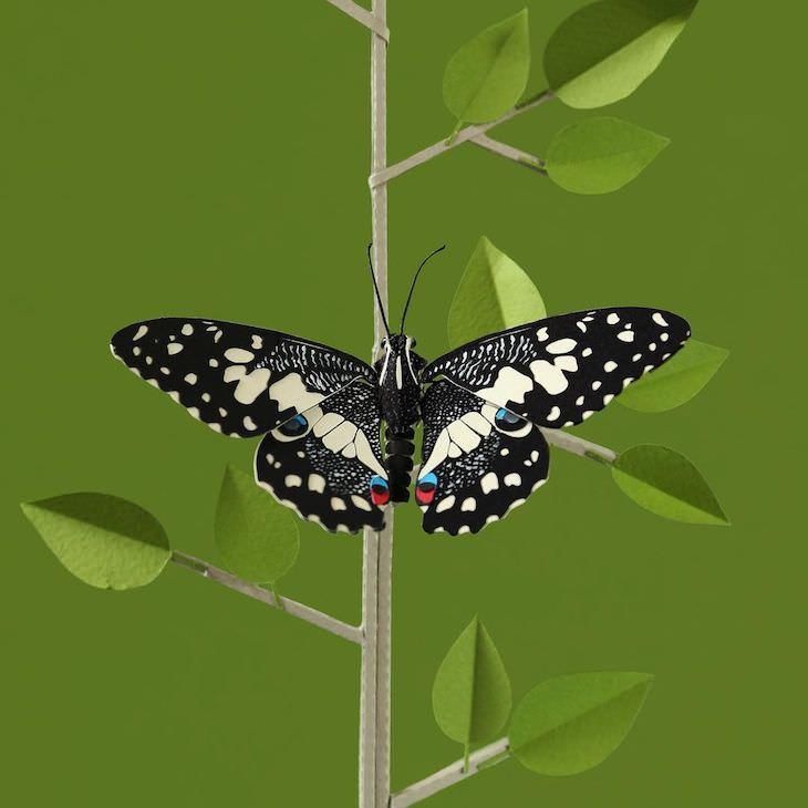 Brilliant Paper Sculptures of Birds & Butterflies by Diana Beltran Herrera  Lime butterfly