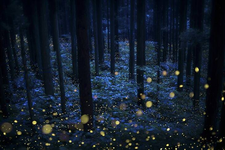 2021 Creative Photo Awards Deep Forest Fairies byKazuaki Koseki