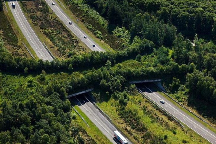 Examples of Engineering, A1 Highway Ecoduct