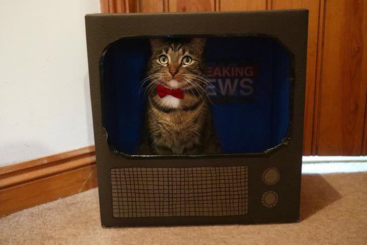 Adorable, Funny and Sassy - 15 Classic Cat Moments news anchor