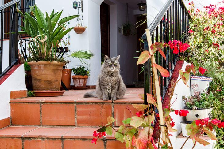 Non-Toxic Plants cat around plants