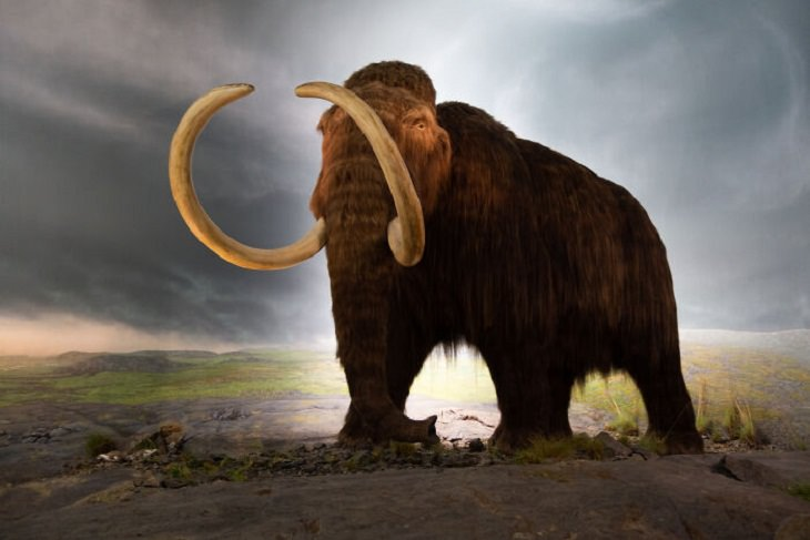 Unsolved Mysteries, Woolly Mammoth