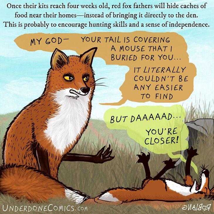 Funny Comics: Animal Dads, fox kit