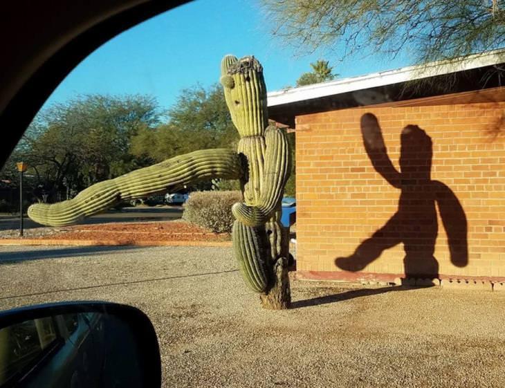 Confusing Photos, cactus