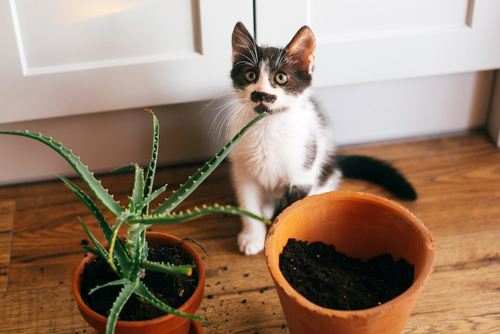 9 Houseplants That Can Be Toxic For Pets and Kids aloe vera