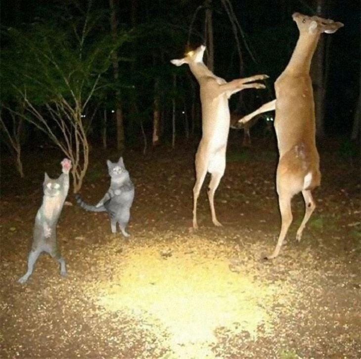 Funny and Wacky Animals, dance