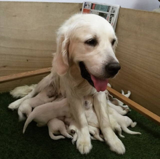 Dog Mommy Moments Dogtopus