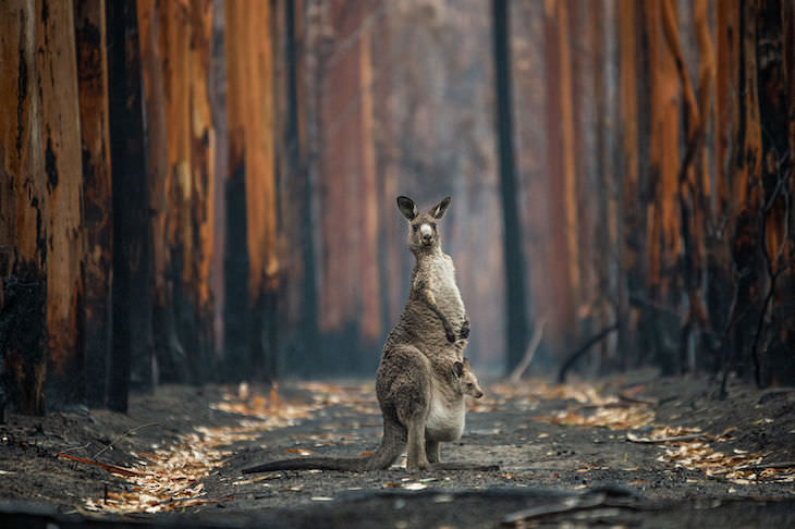 """BigPicutre Natural World Photography Contest: The Stunning Winners, """"Hope Amidst the Ashes"""" by Jo-Anne McArthur"""