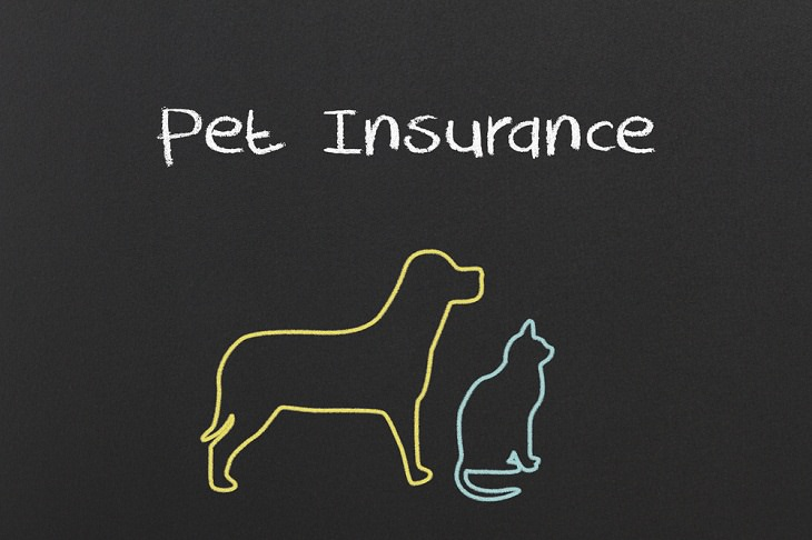 Money-Saving Tips for Pet Owners, Pet Insurance