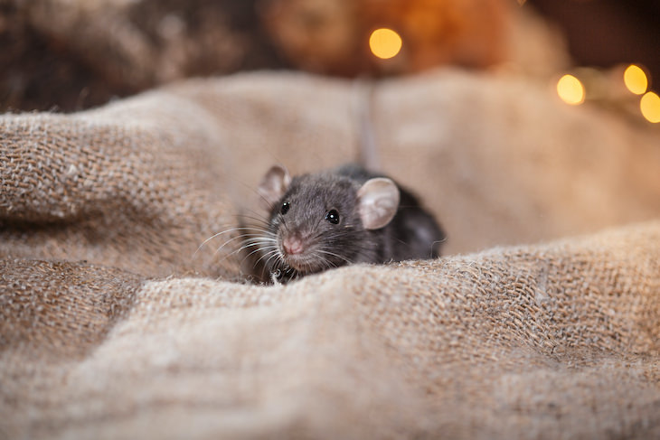 Why Your Basement Smells Musty and How to Eliminate It mouse