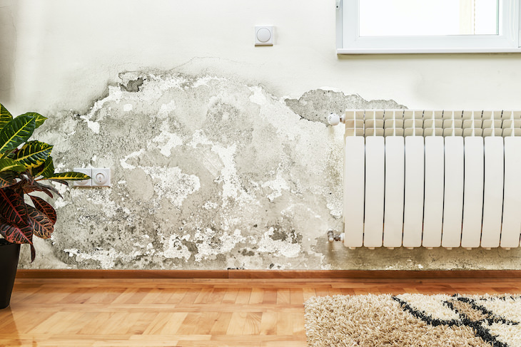 Why Your Basement Smells Musty and How to Eliminate It mold and mildew