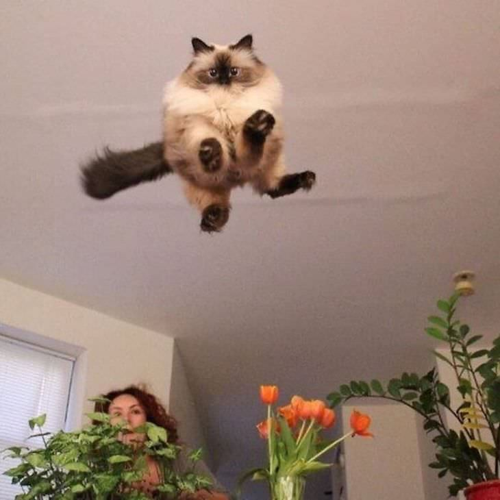 Weird and funny cats leaping