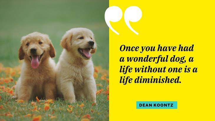 Cute Dog Quotes, pet owner