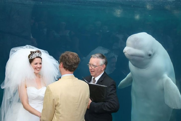 Epic Photobombing Moments, dolphin, wedding