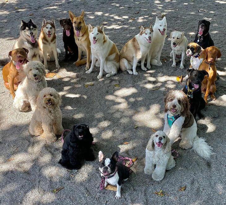 Perfect Group Dog Photos heart shape