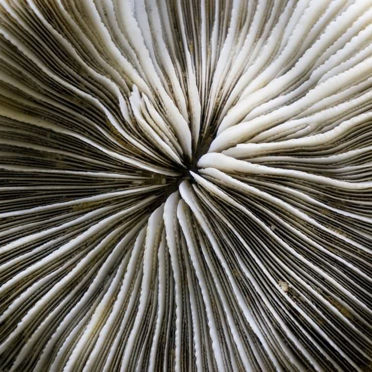 Ordinary Objects Through Microscopic Lens fossillized coral
