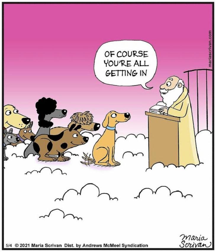 Cute and Funny Single Panel Comics, dogs heaven