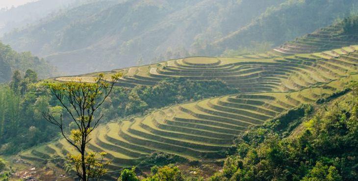 Beauty of Vietnam, rice fields