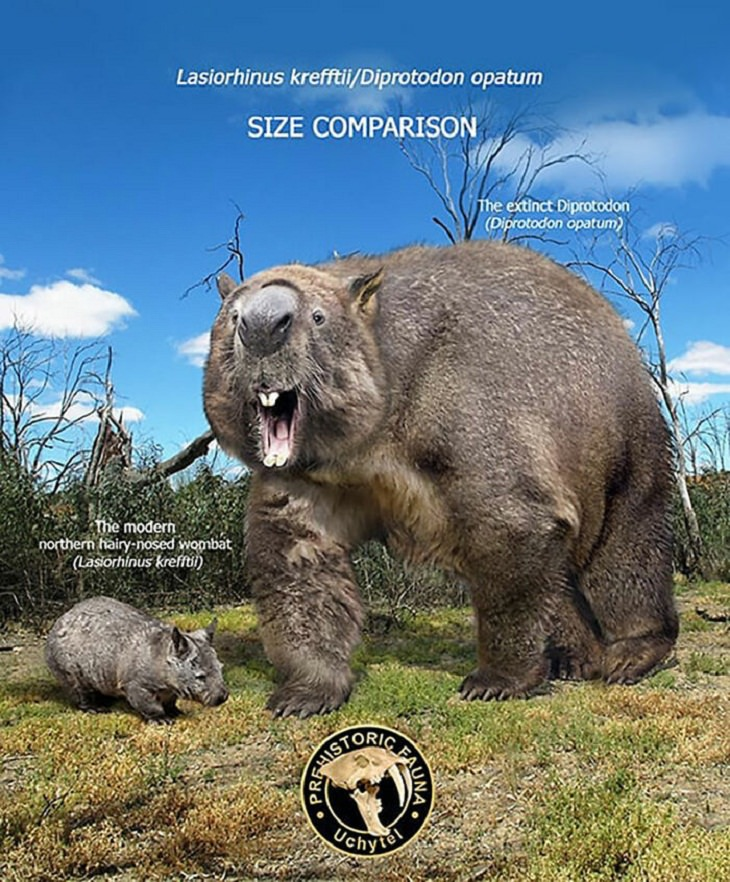Prehistoric Animals and Their Modern Counterparts, wombat