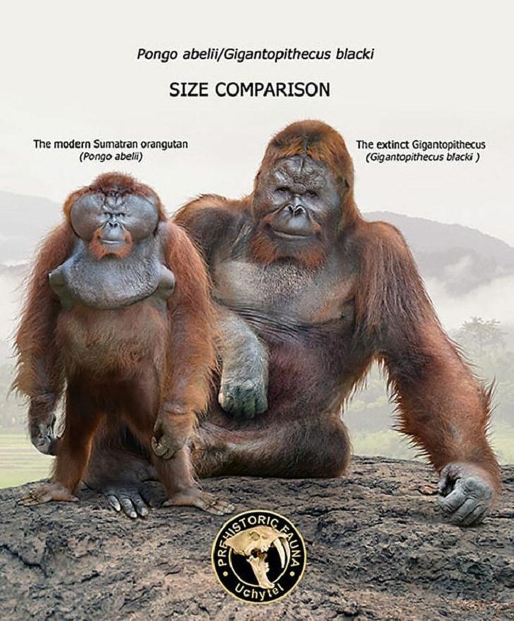 Prehistoric Animals and Their Modern Counterparts, orangutan