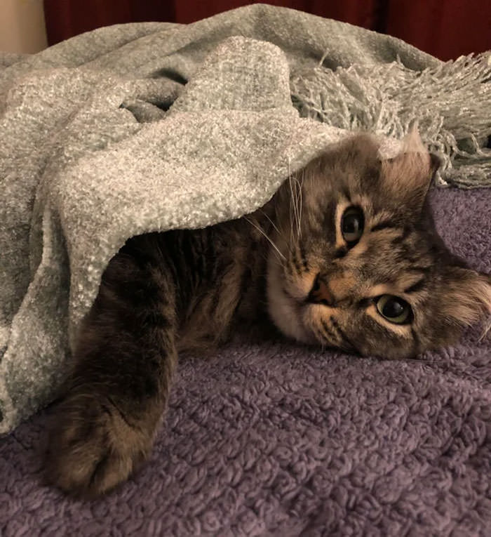 Adorable Cozy Cats All Tucked In