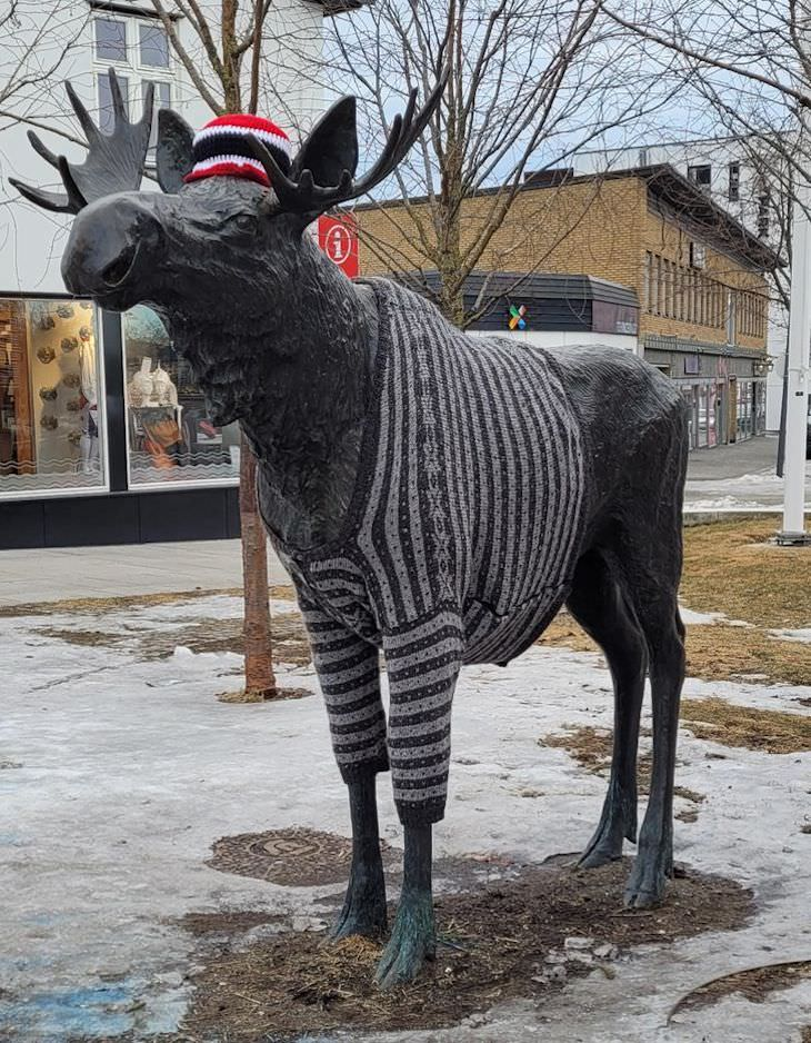 Life In Norway in 14 Fascinating Images moose with sweater