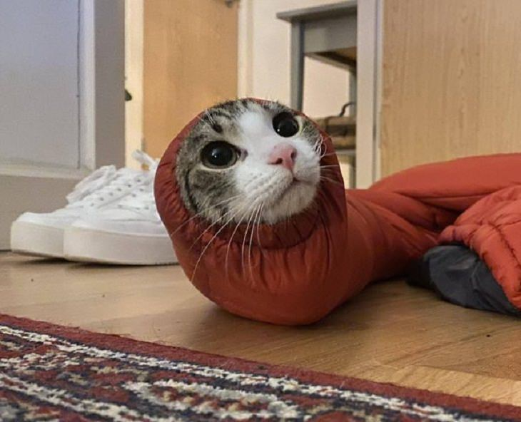 Funny and Cute Pets, cat