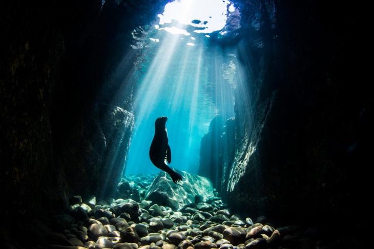World Oceans Day Photo Contest Winners Nur Tucker