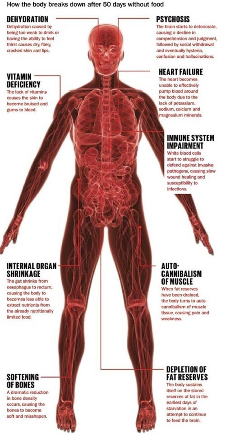Useful Infographics human body