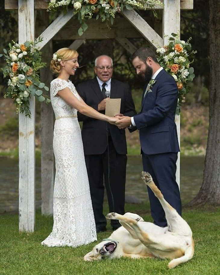 Funny Wedding Photos, dog