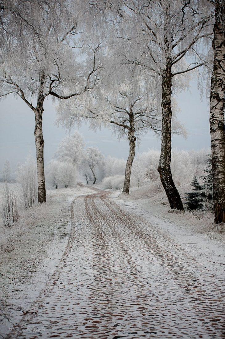 road side trees