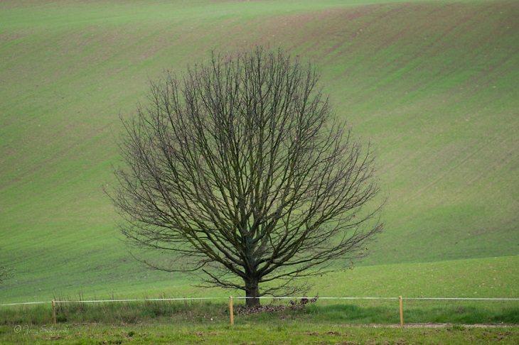 oak tree over the seasons