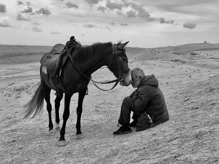 2021 iPhone Photography Awards, horse and man